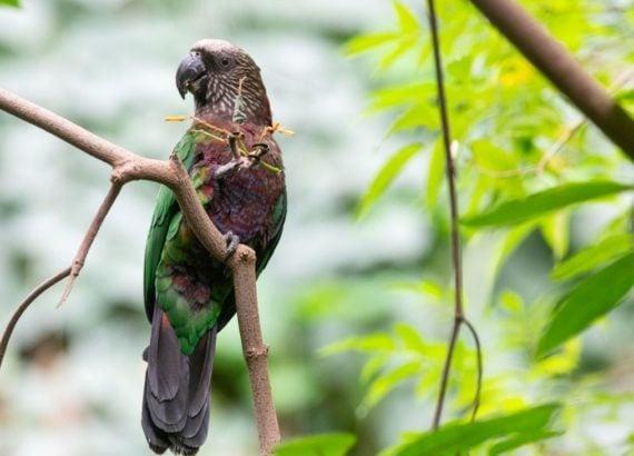 Flora e fauna brasileira - Biodiversidade brasileira
