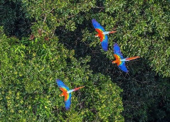 A importância da Floresta Amazônica para o mundo