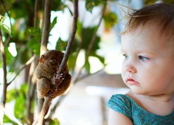 Ensine a importância da floresta amazônica aos seus filhos e conscientize-os sobre a preservação do Meio Ambiente!