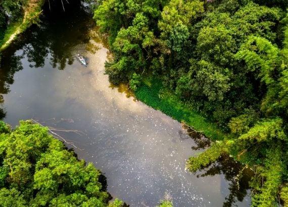 Qual a importância da Floresta Amazônica