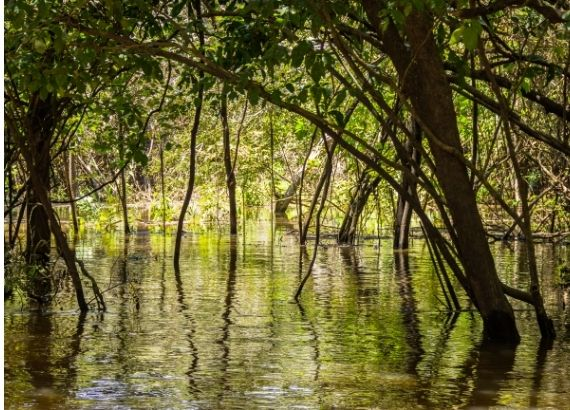 Veja a importância da floresta Amazônica